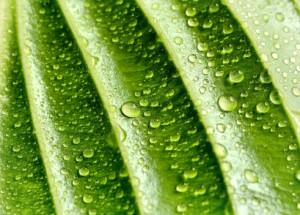 Energétique des plantes : humide