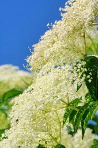 Energétique des plantes : refroidissantes
