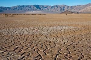 Energétique des plantes : sec