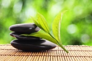 Anti stress : les plantes