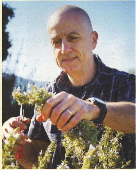 Romarin - Plantes et Santé