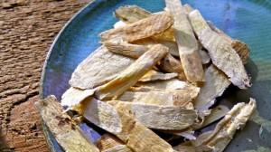 Astragale de Chine (Astragalus membranaceus)