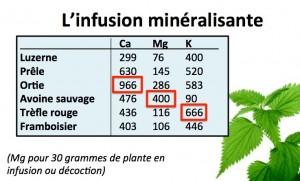 gastro : plantes reminéralisantes