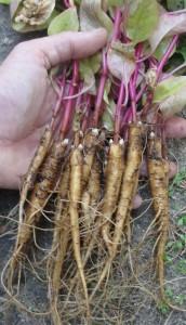 Formation en herbalisme