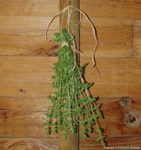 Faire sécher les plantes médicinales