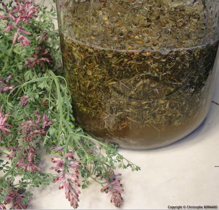 Vinaigre de plantes médicinales
