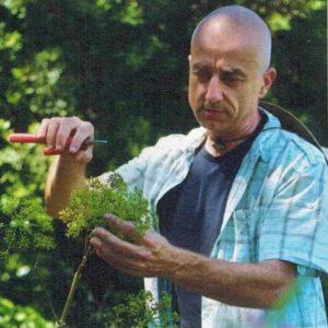 angelica-plantes-et-sante