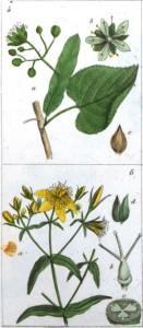 Fiches de plantes