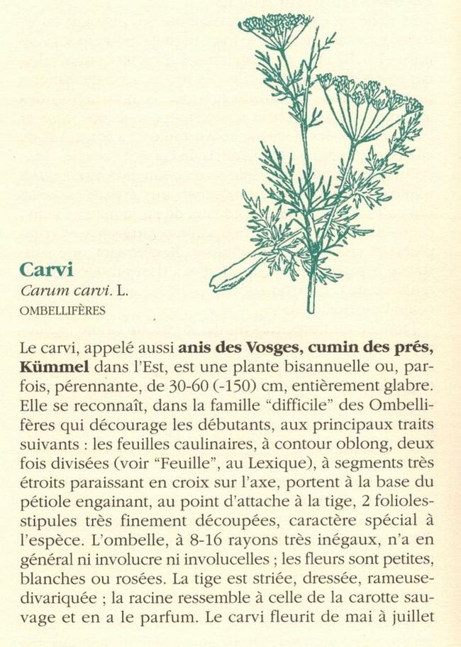 """""""Le Livre des Bonnes Herbes"""" de Pierre Lieutaghi"""