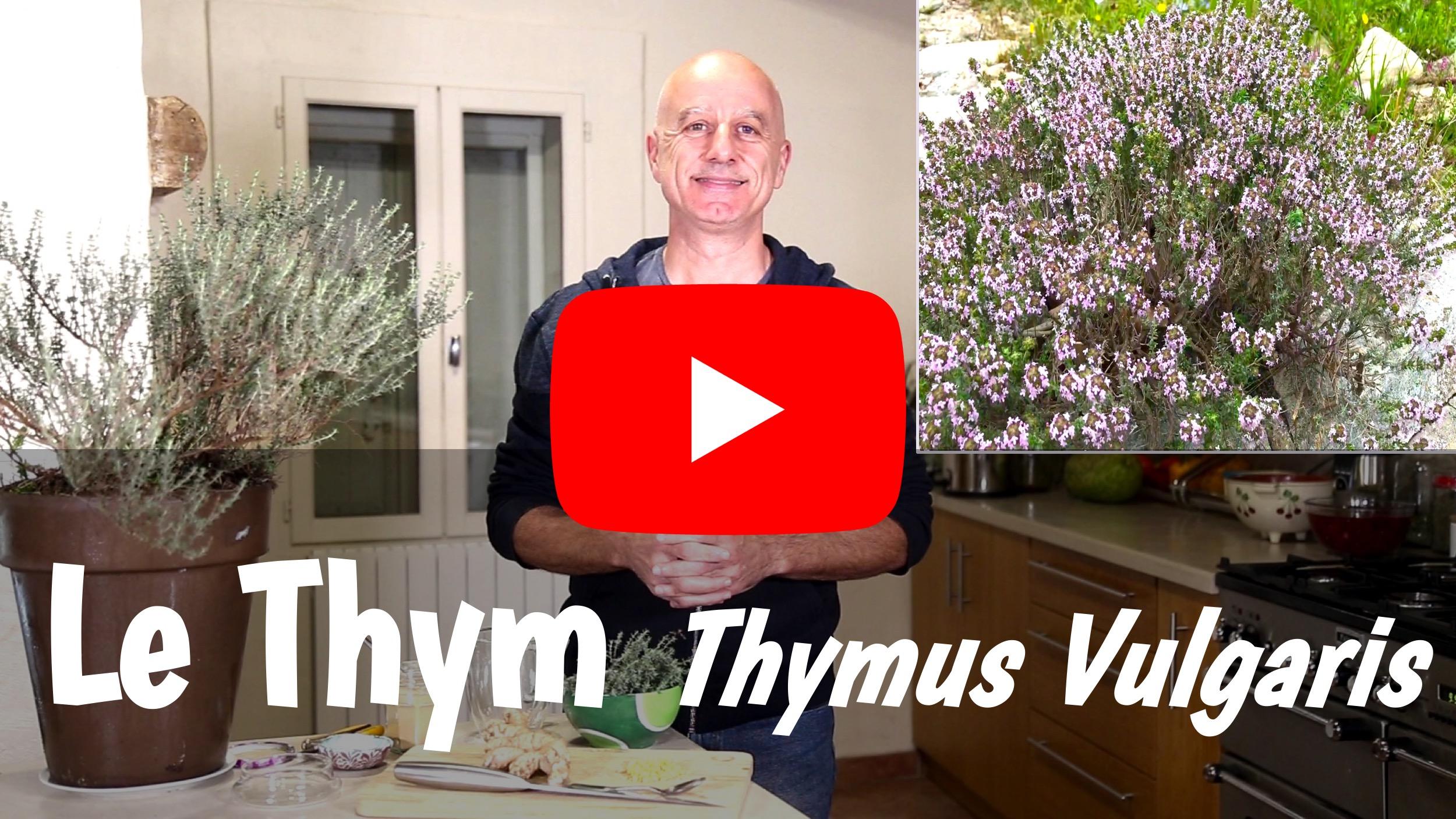 Différentes Variétés De Thym les bienfaits du thym (thymus vulgaris) : bronchites
