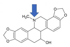 Alcaloïde : chélidonine