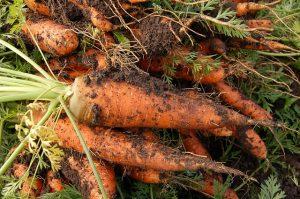 prebiotiques-legumes-jardin
