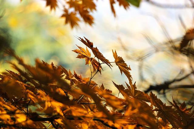 Tisanes santé en automne