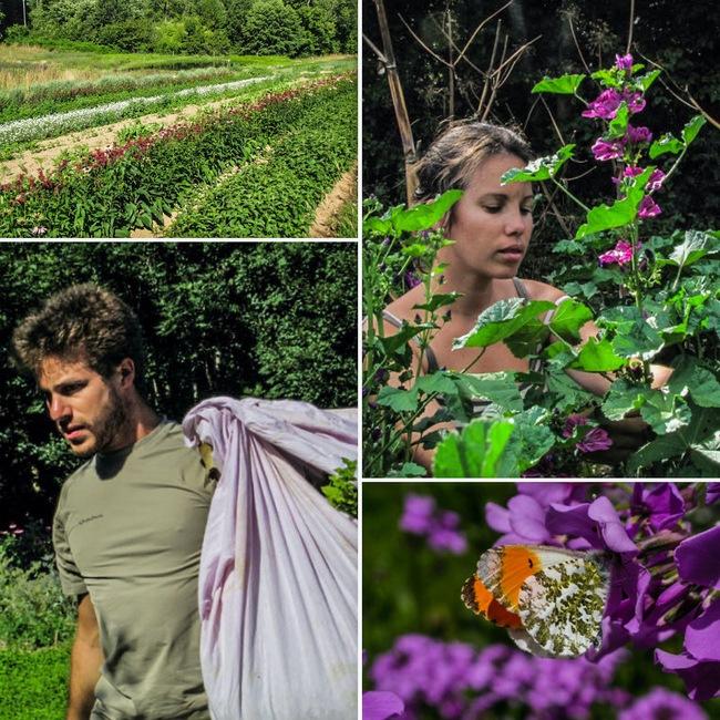Audrey et Julien : Paysans Herboristes