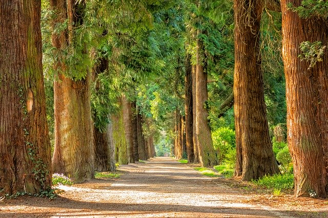 Forêt et convalescence