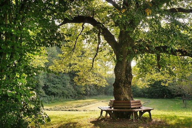 Rentrée : se ressourcer près d'un arbre
