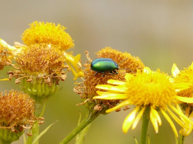 Cueillir les plantes sauvages