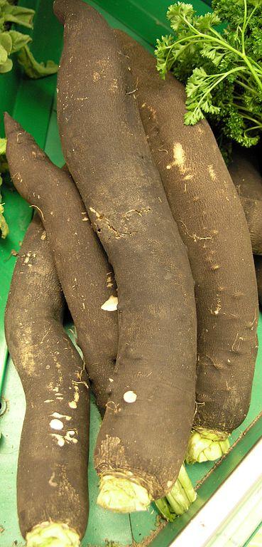 les bienfaits du radis noir