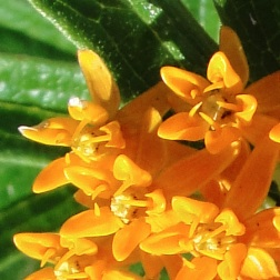 Althea Provence : Plantes médicinales et nutrition