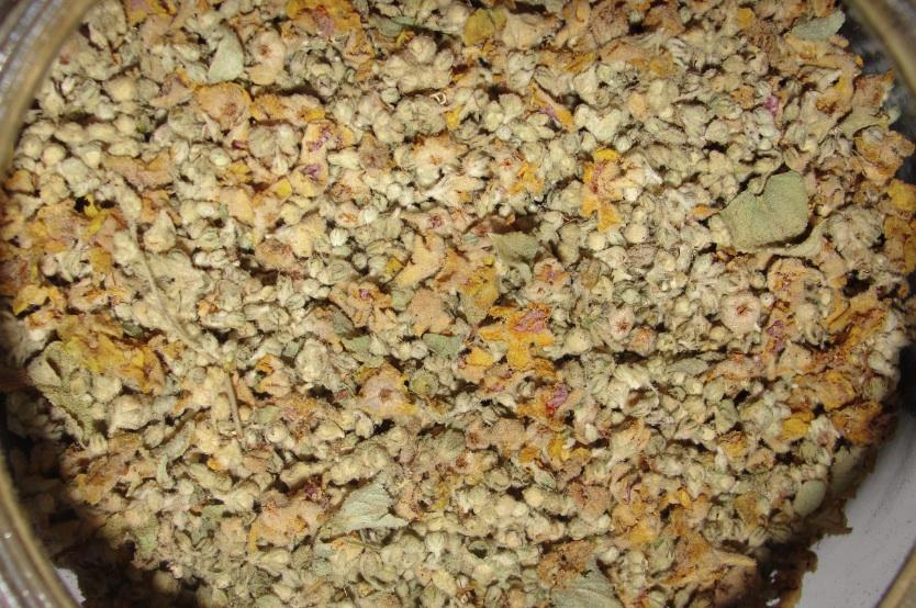 Bouillon blanc (Verbascum sinuatum)
