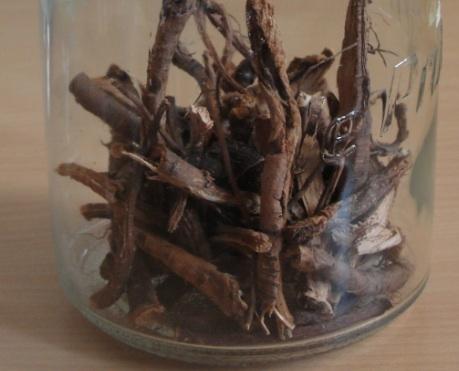 Remède contre la constipation: patience (Rumex crispus), racines séchées