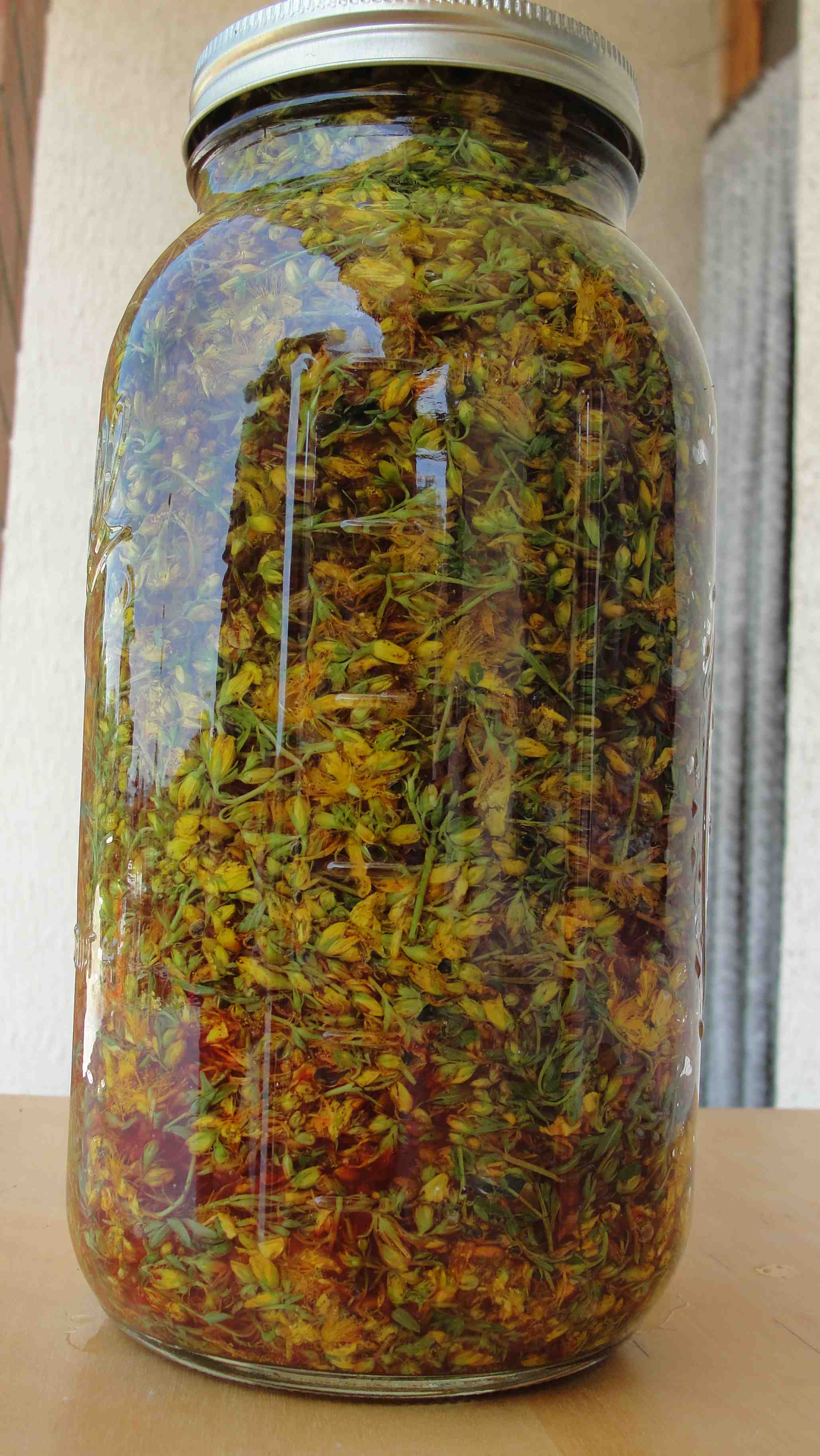 Teinture de millepertuis (Hypericum perforatum) - macération Jour 1 - Photo AltheaProvence